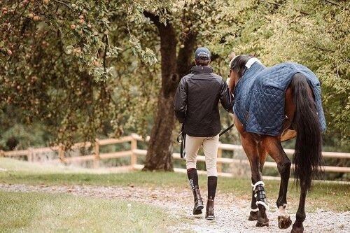Bodenarbeit-Pferd