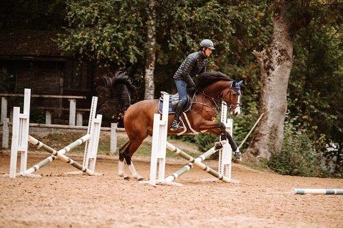 Pferd-gymnastizieren-In-Outs