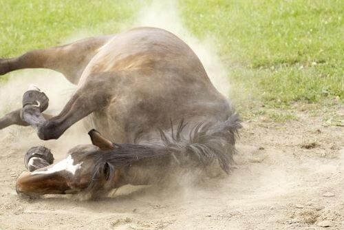 Pferd-w-lzen