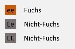 Genetik-FuchsiDIY1SYgHkMi0