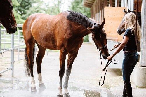 Pferd-abduschen