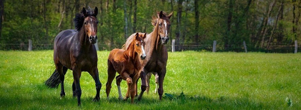 Artgerechte Pferdehaltung