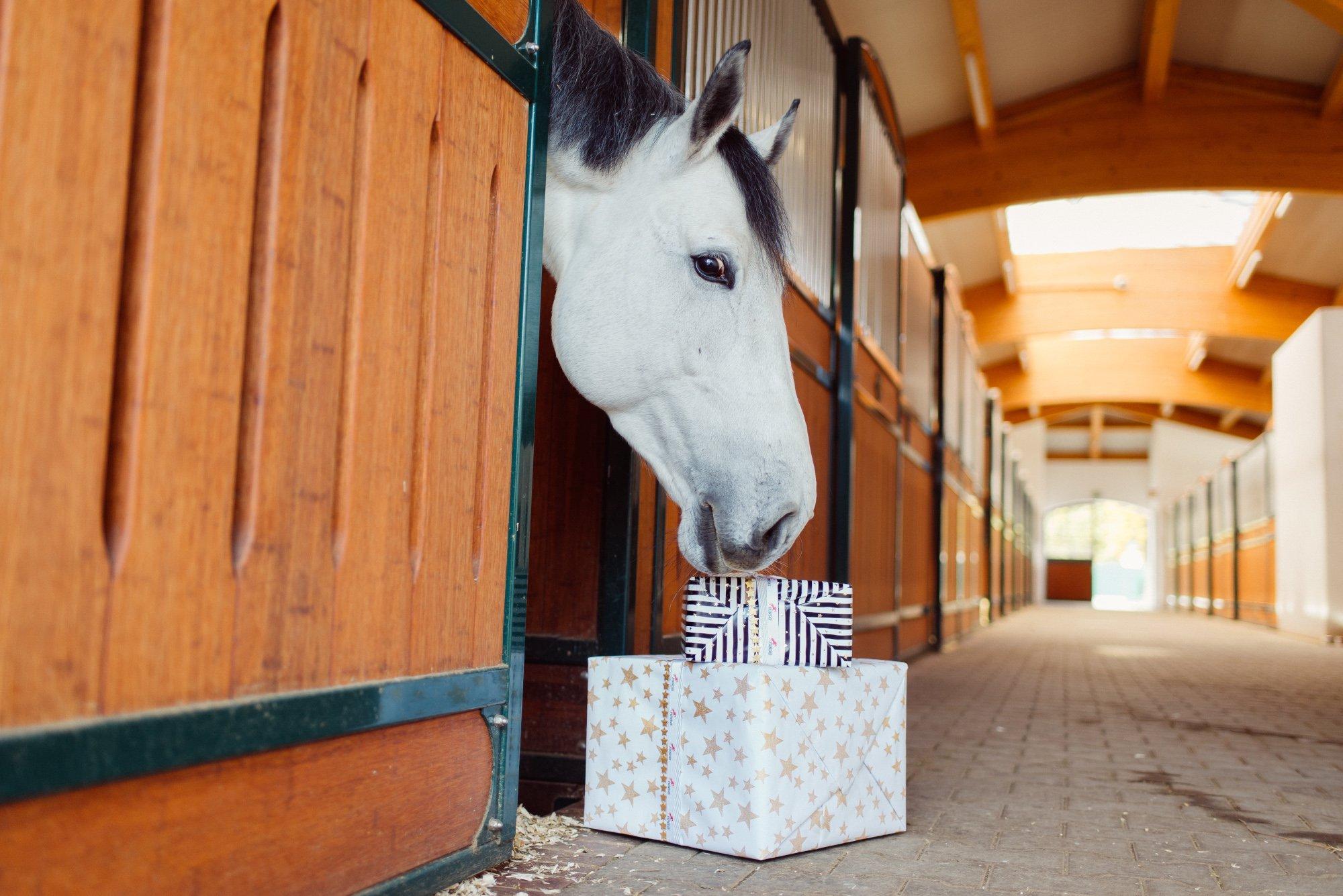 """Weihnachten mit Pferd - Wissenswertes über die """"Feiertagskrankheit"""" Kreuzverschlag"""
