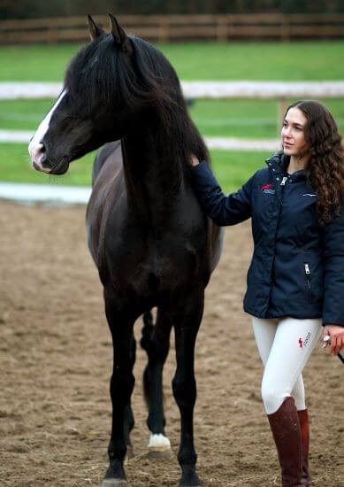 Rappe-Schwarzes-Pferd