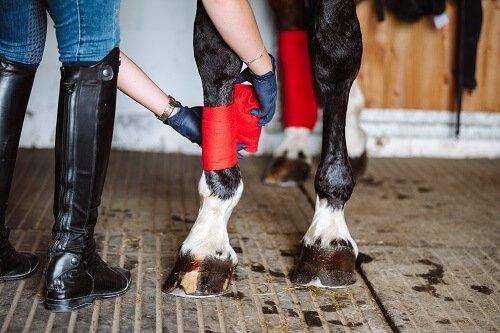 Ein-Pferd-richtig-bandagieren