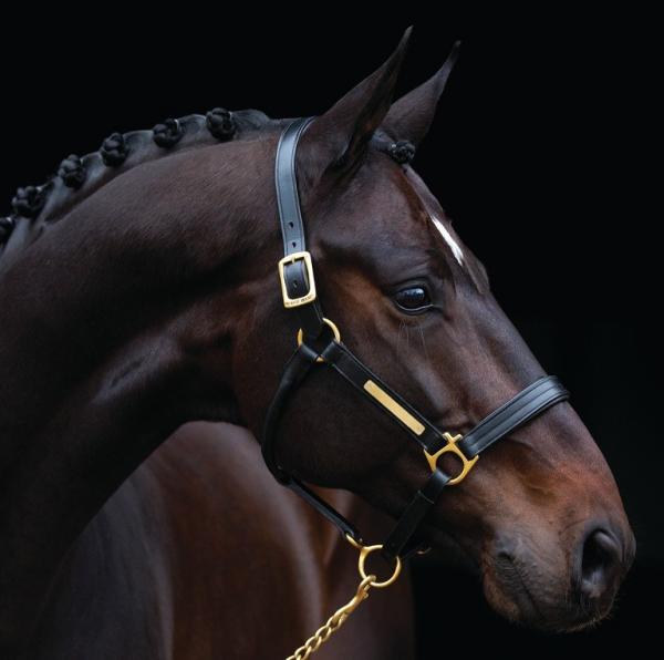 Horseware Halfter Amigo, Lederhalfter, braun, schwarz
