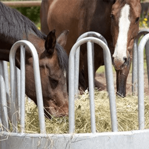 Offenstallhaltung-Pferd