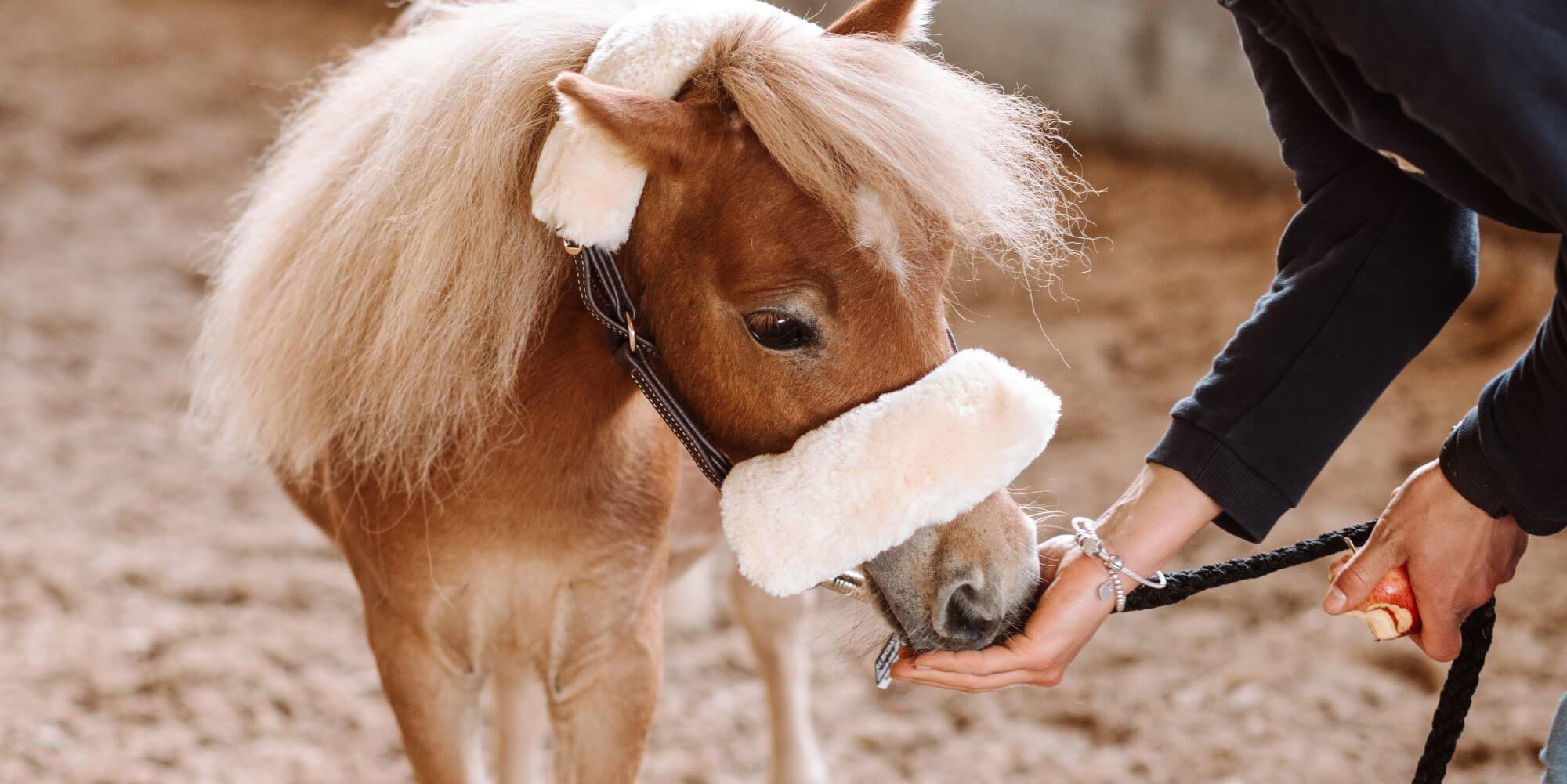 Pferdeleckerlis: Dein Pferd gesund verwöhnen