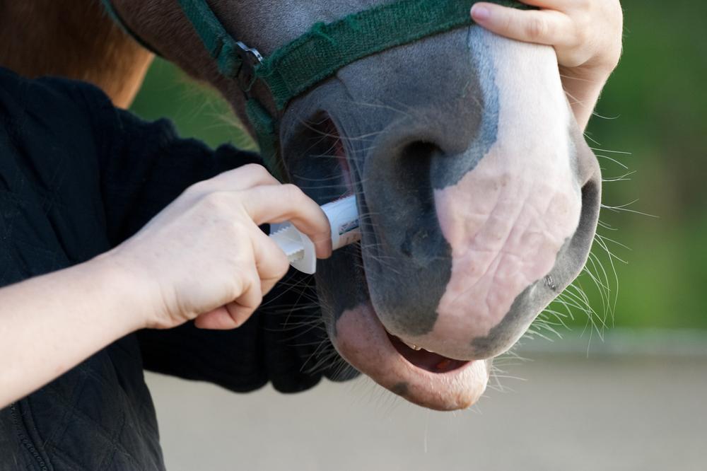 Die richtige Anwendung von Wurmkuren für Pferde