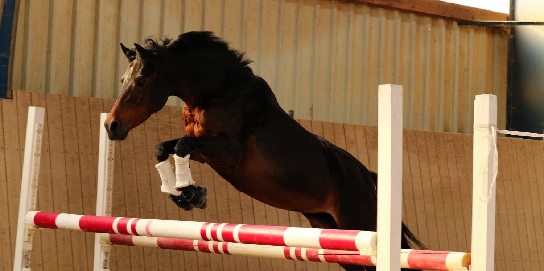 Freispringen - Mehr als nur eine gute Abwechslung für das Pferd