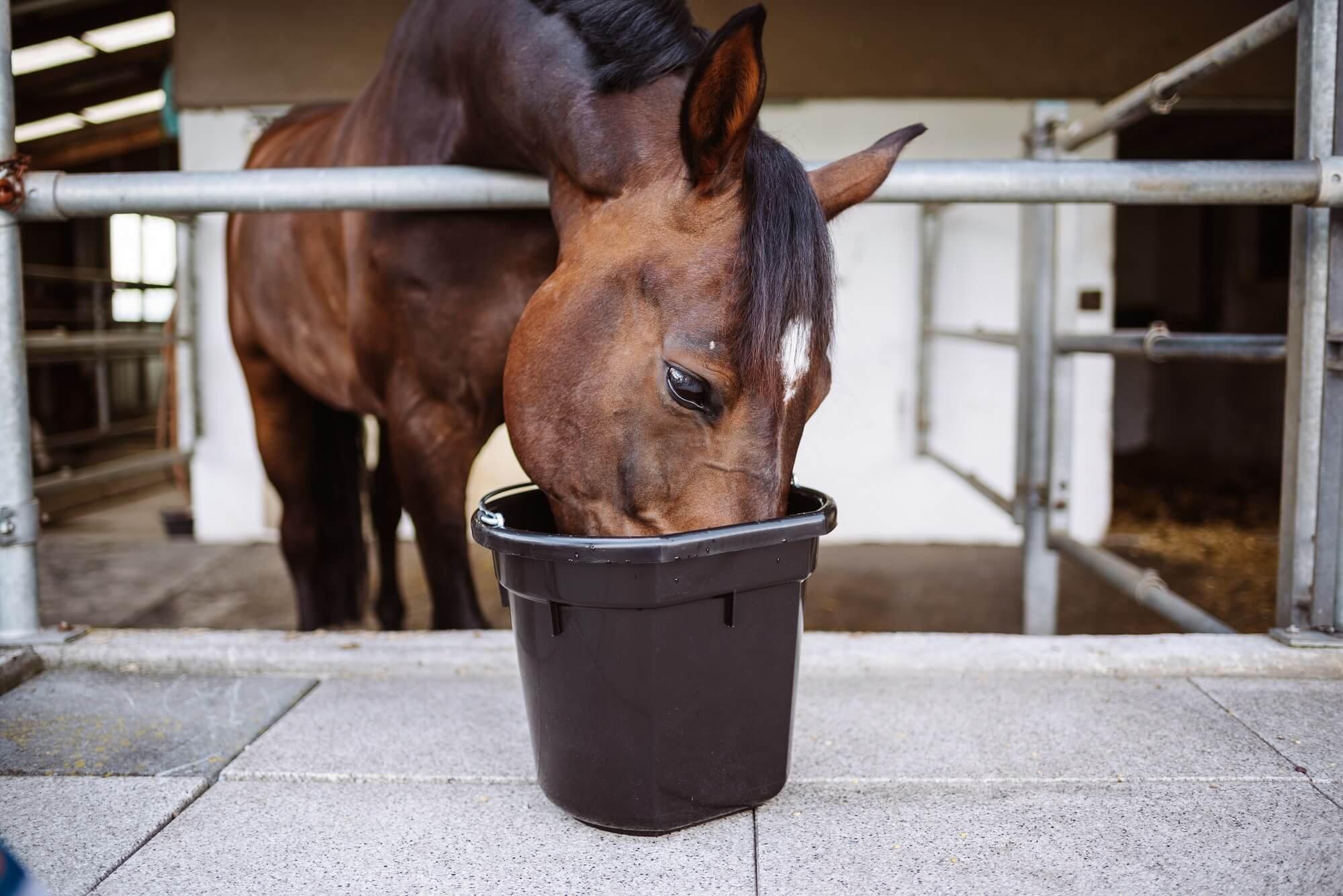 Futter-Allergien beim Pferd