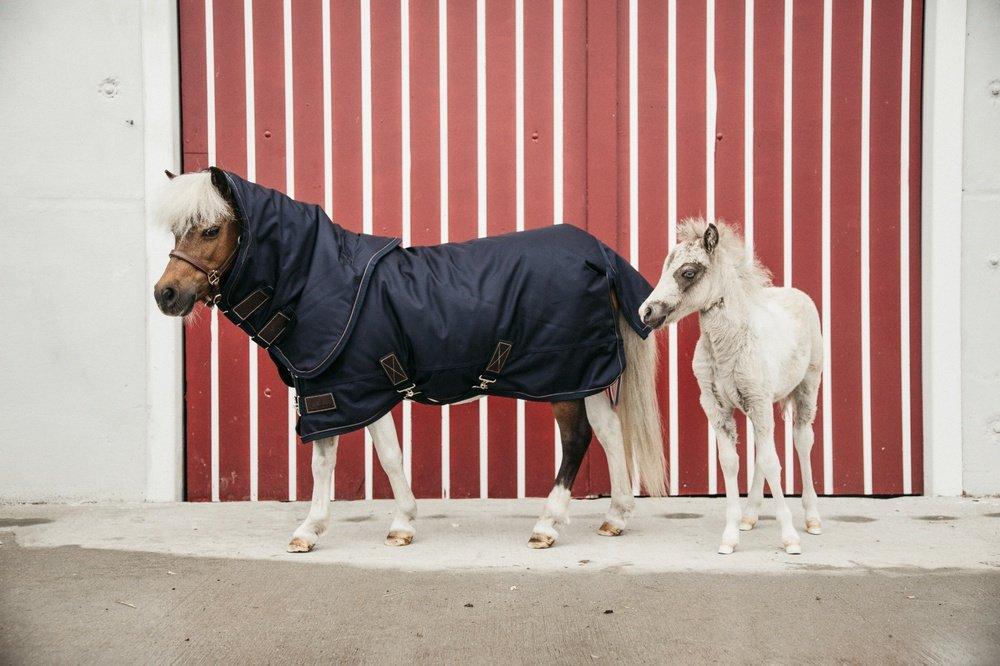 Die geeignete Regenbekleidung für Reiter und Pferd: So schützt du dich und deinen Vierbeiner bei nassem Wetter