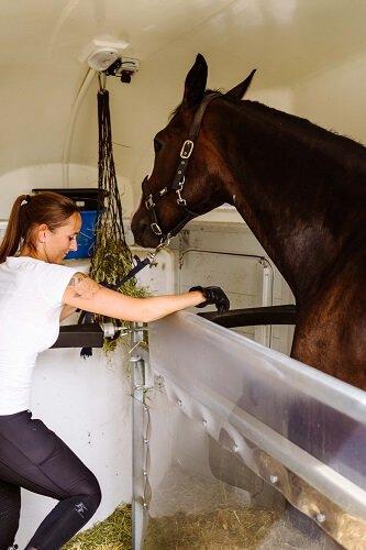 Verladetraining-f-r-Pferde