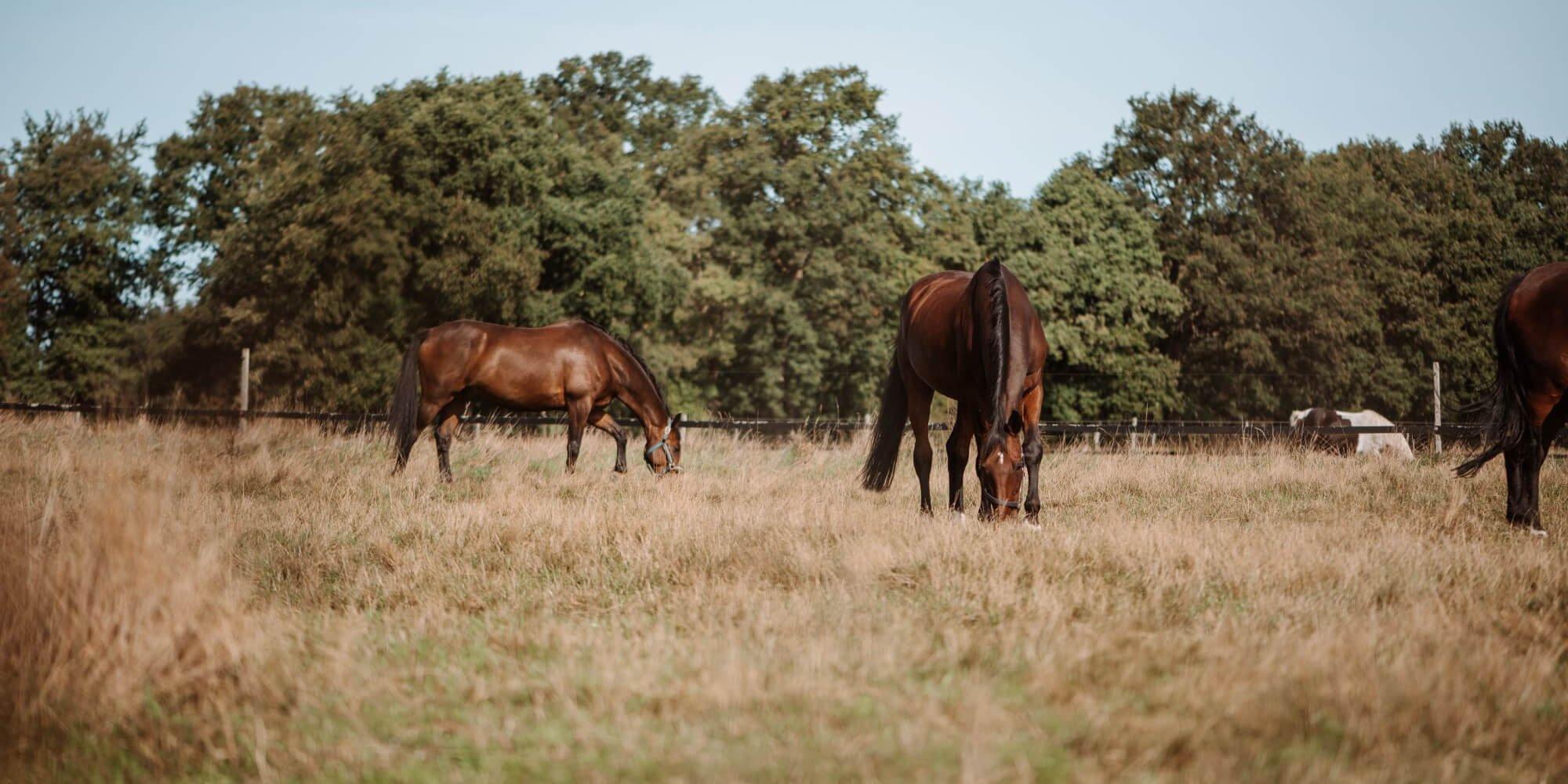 Aktivstall für Pferde: Ist das artgerechte Pferdehaltung?