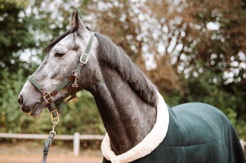 Dunkler-Schimmel-Pferd