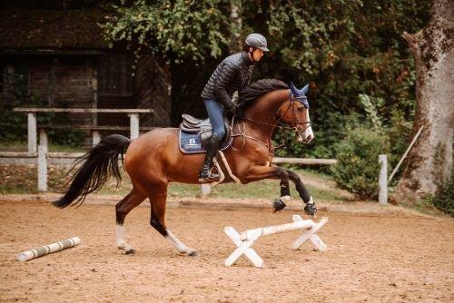 Pferder-cken4ptJ9OBhwtmO5O