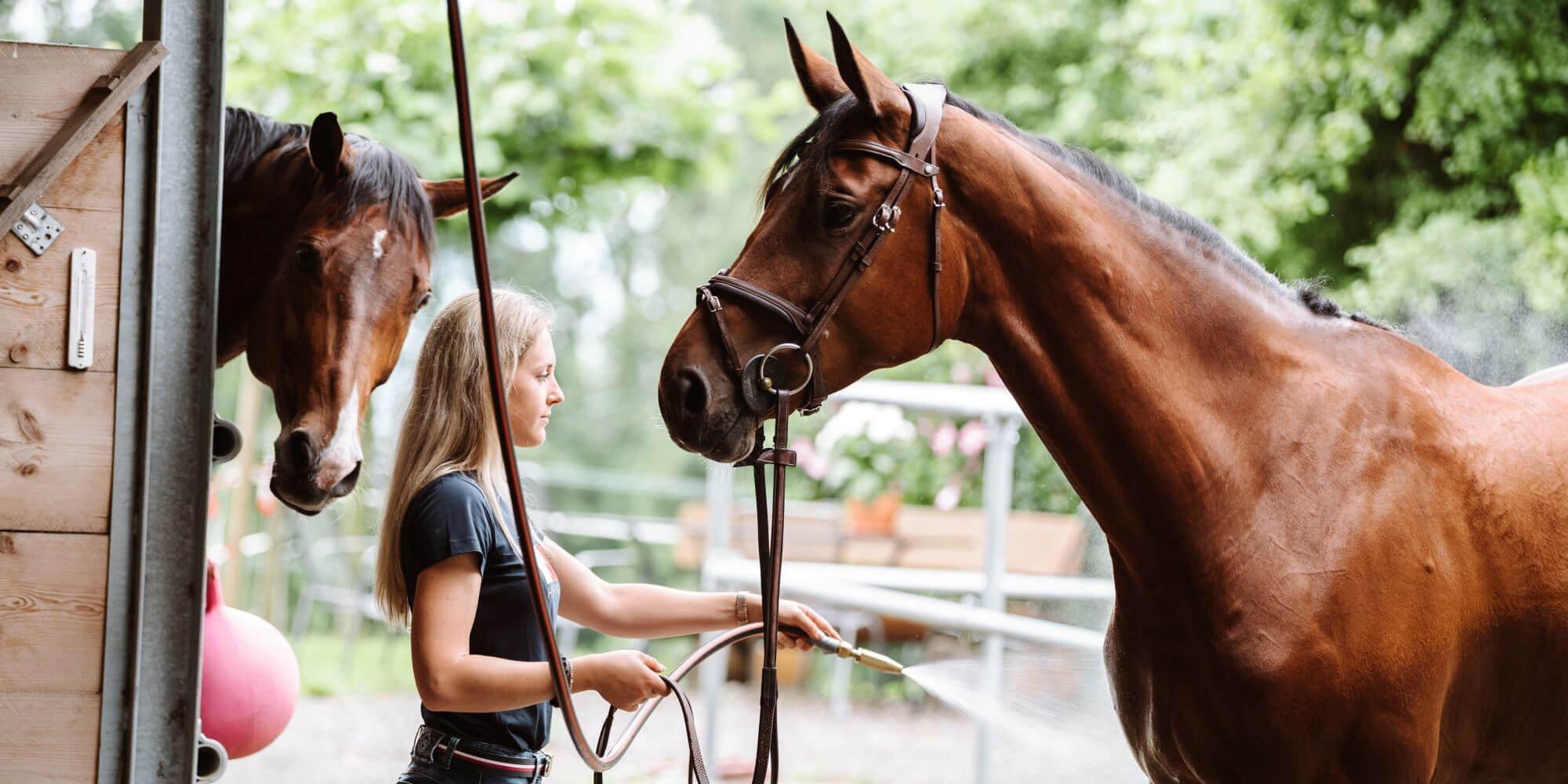 Pferde richtig waschen und abspritzen