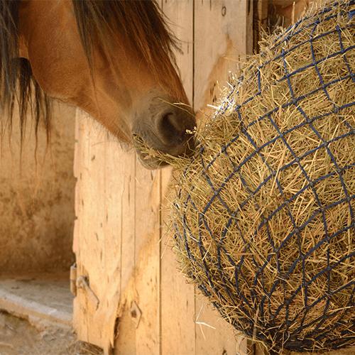 Heunetz-Pferd