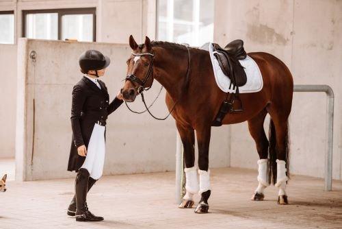 Pferd-und-Reiter