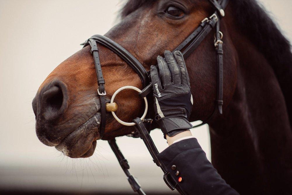 Welches Gebiss ist das richtige für mein Pferd? Janne Friederike Meyer berichtet über ihre Erfahrungen