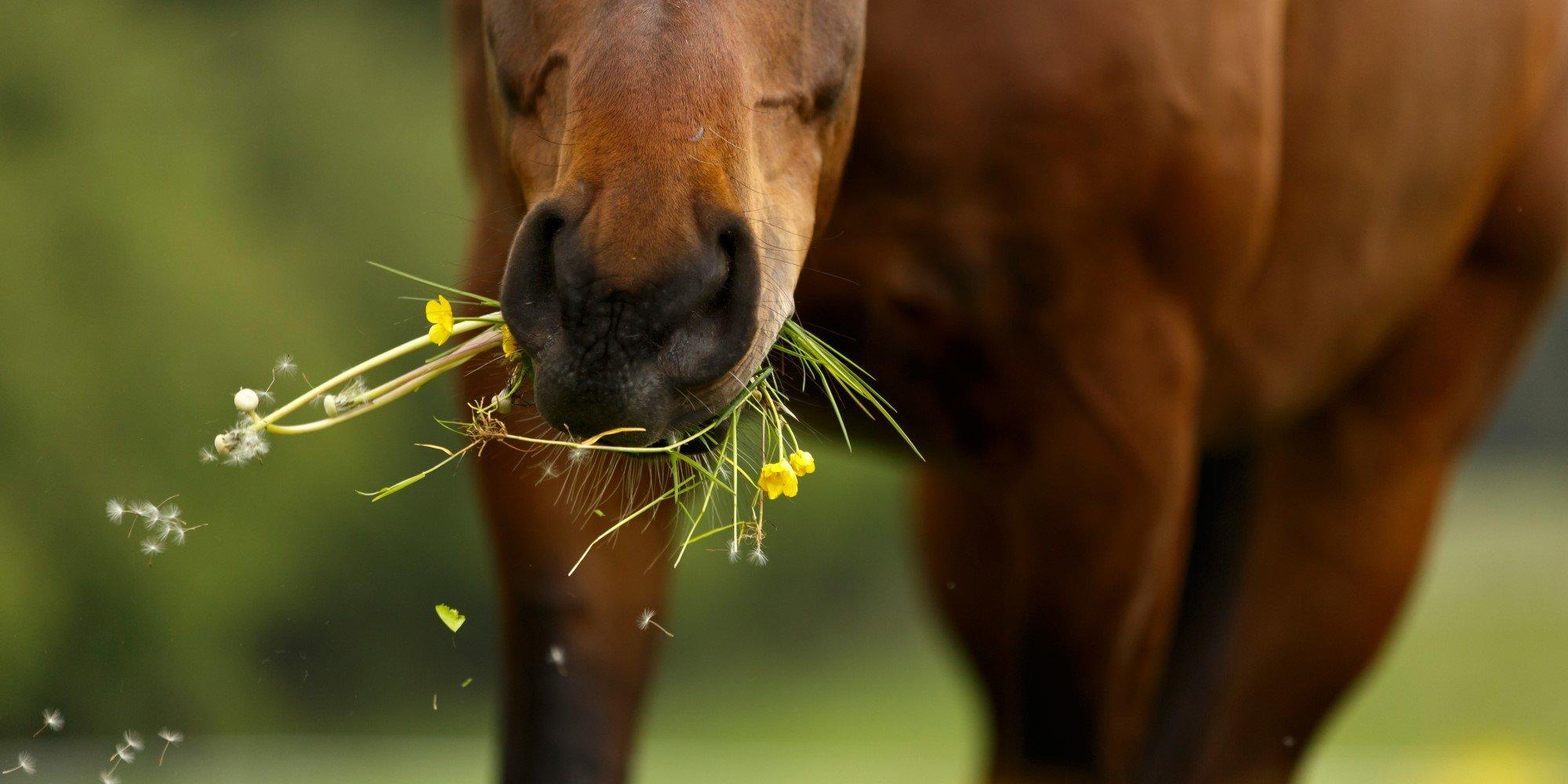 Diese Giftpflanzen sind gefährlich für dein Pferd