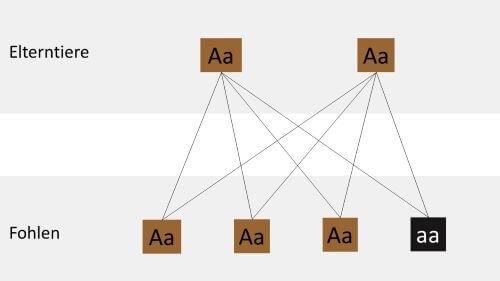 Kreuzung-zweier-Braunen