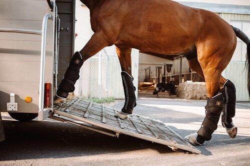 Pferd-transportieren