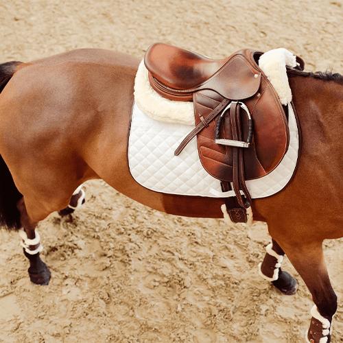 Pferder-cken2BABIVaOQU3TBQ