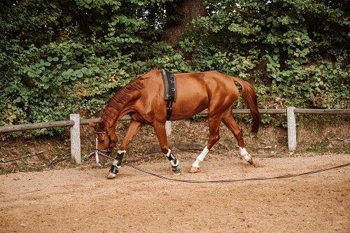 Pferd-gymnastizieren-longieren