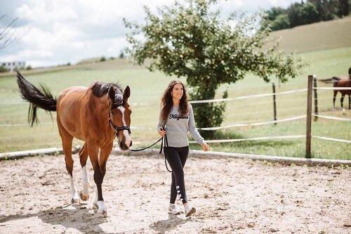 Pferd-gymnastizieren-Bodenarbeit