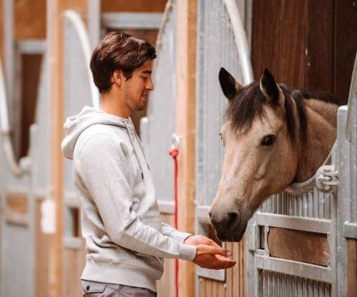 Falbe-Pferdefarbe