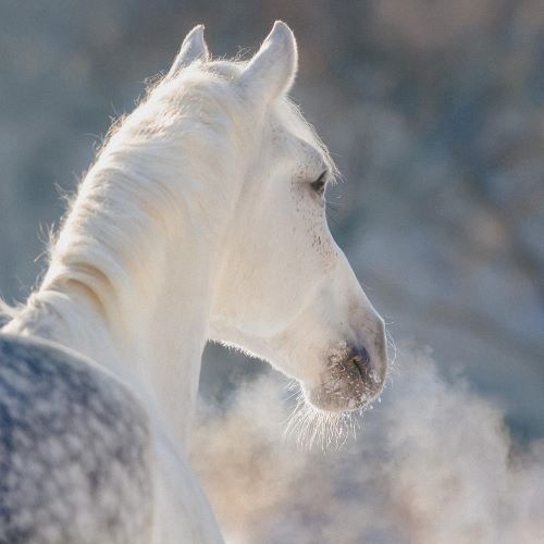 Winter-Pferdx6I5vkoQQinw9