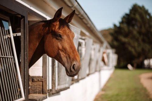 Pferd-in-der-Box