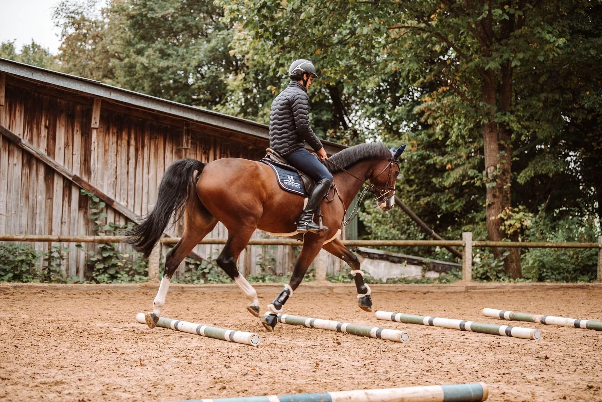 Pferd-gymnastizieren-Stangenarbeit