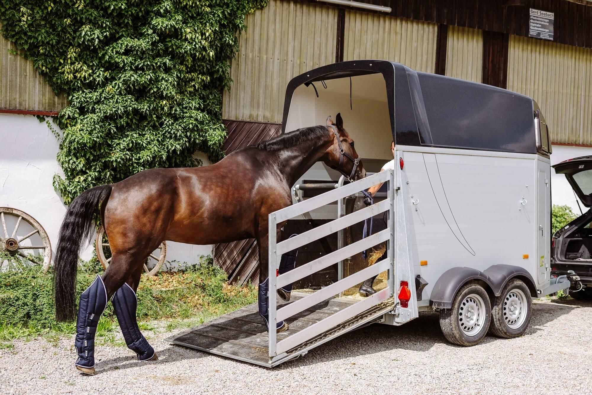 Pferd verladen: So bekommst du dein Pferd sicher in den Hänger