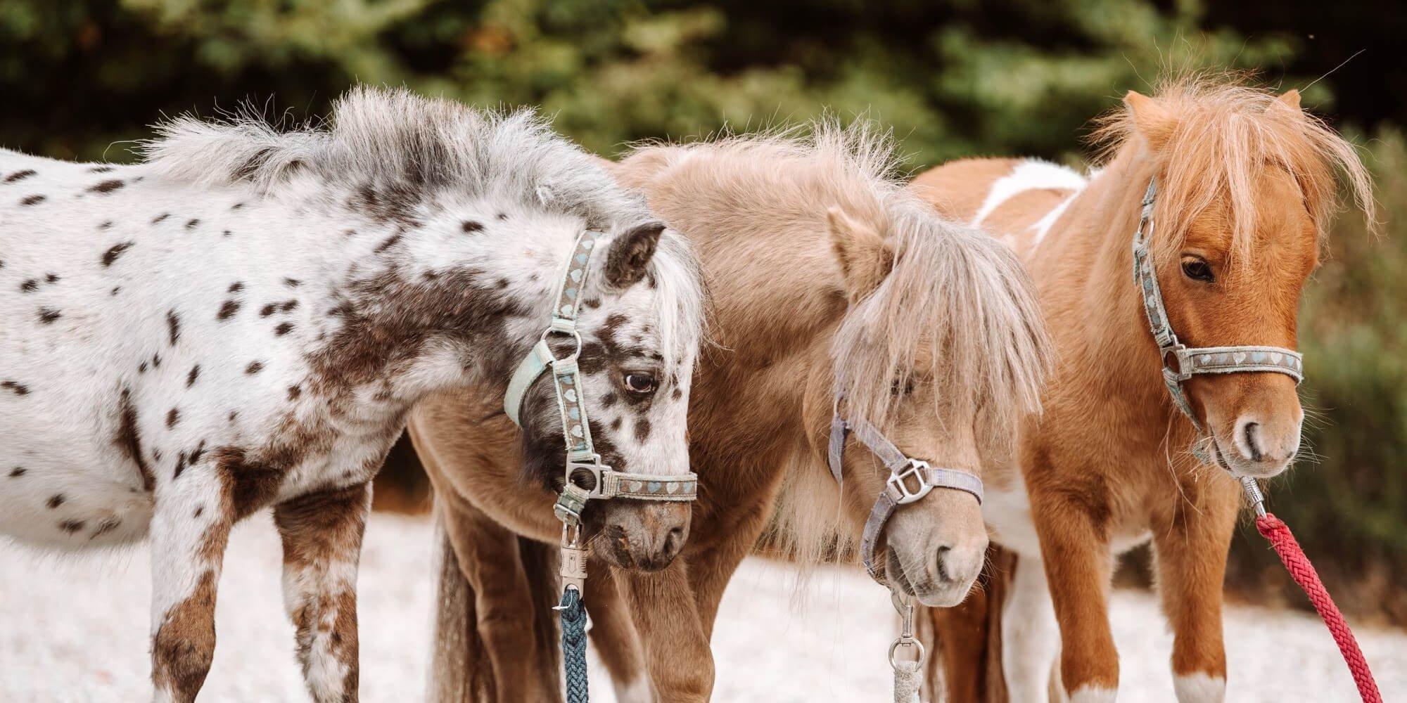 Fellfarben: Welche Pferdefarben gibt es?