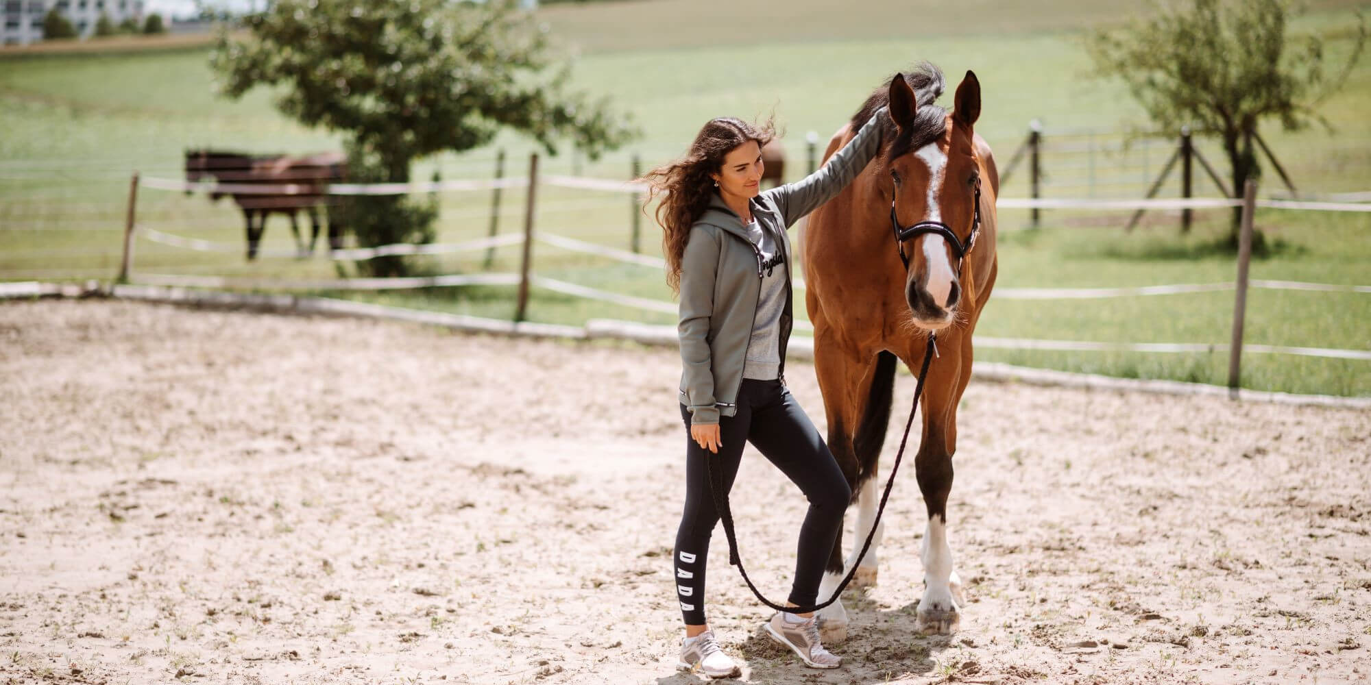 Was kostet ein Pferd im Monat? Die Kosten der Pferdehaltung im Überblick