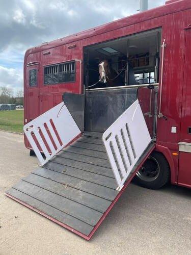 Pferd-auf-dem-LKW