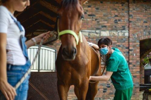 Tierarzt-untersucht-D-mpfigkeit