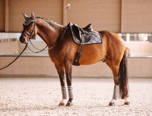 Dressuroutfit-Pferd