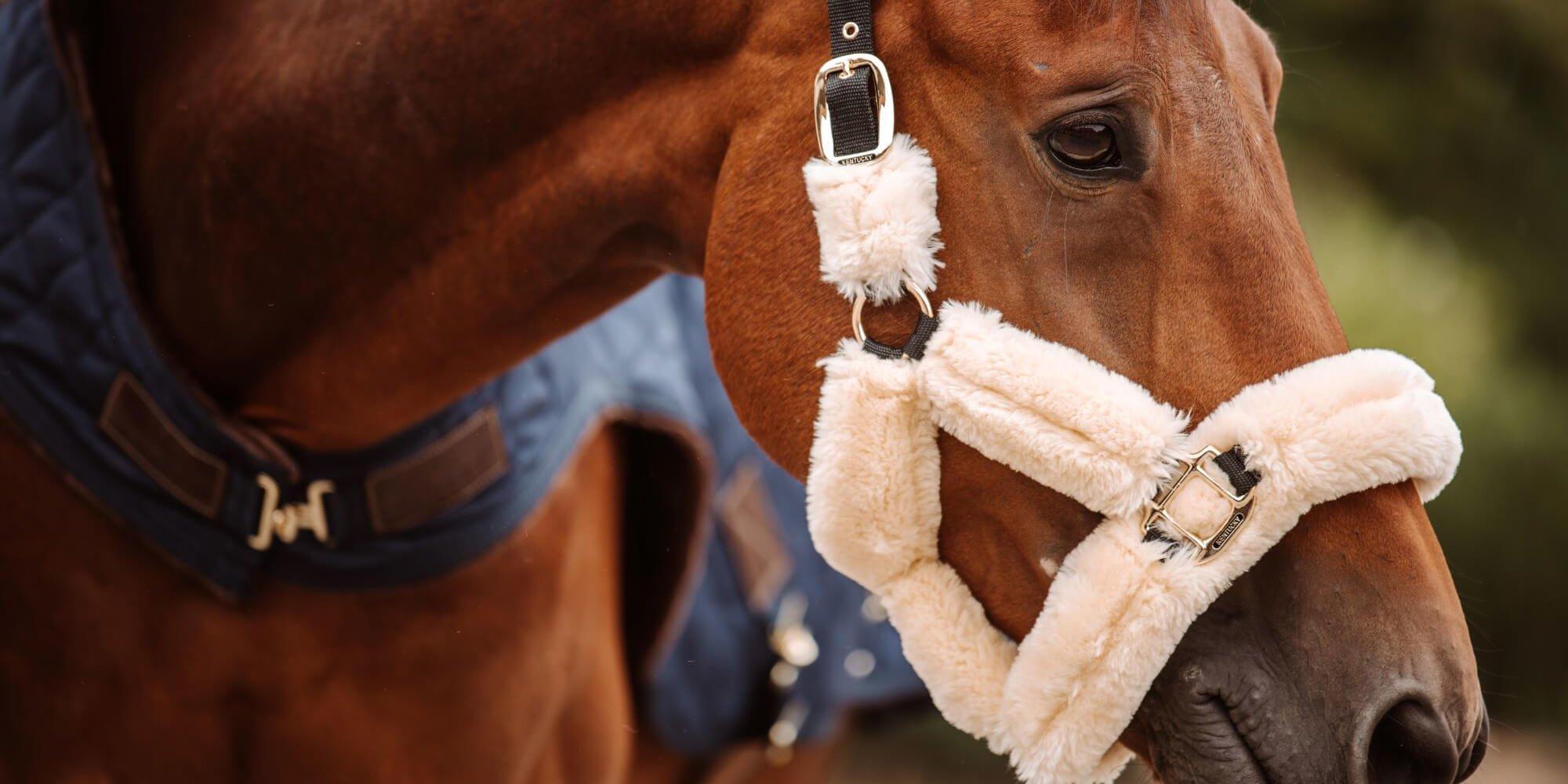 Kehlkopfpfeifen beim Pferd