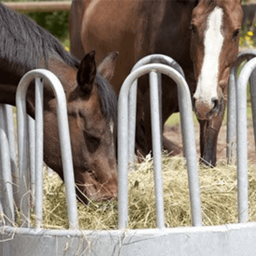 Heuraufe-Pferde