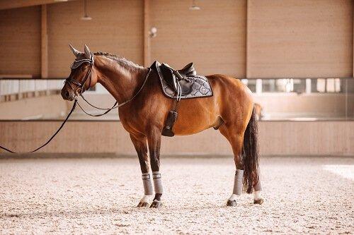 Bandagen-f-rs-Pferd2