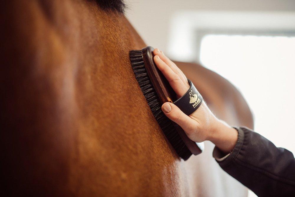 Das richtige Zubehör und nützliche Tipps zur Pferdepflege