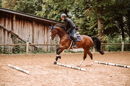 Pferd-gymnastizieren-Galoppstangen