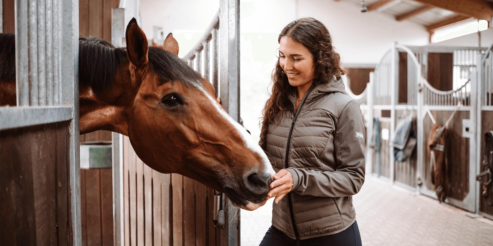Die Grundausstattung für das Pferd