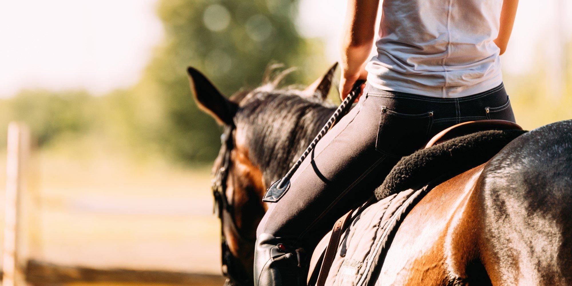 Alles zu Rückenproblemen beim Pferd