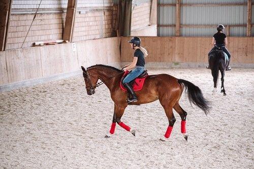 Pferd-gymnastizieren-reiten
