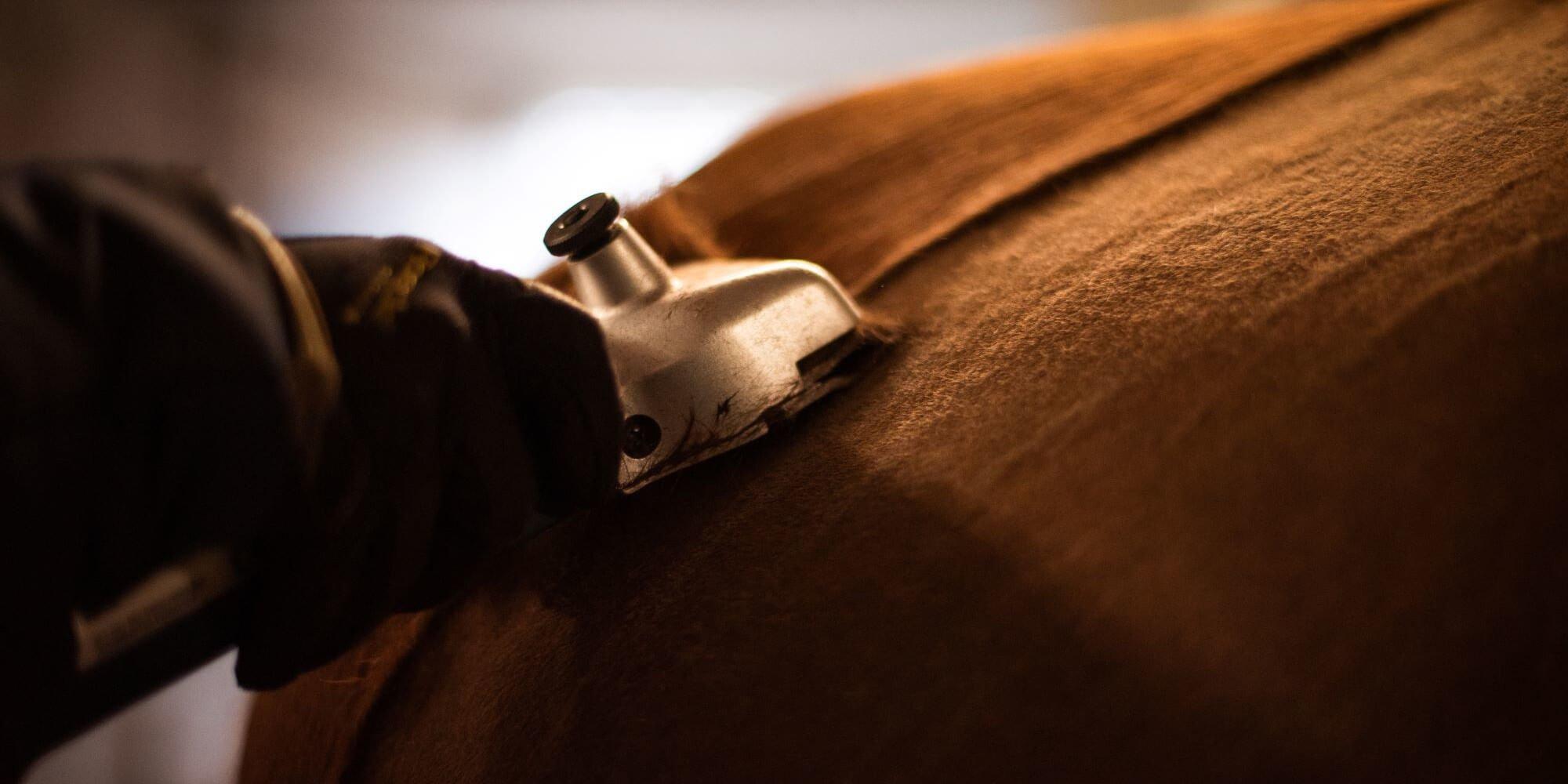 Pferde scheren: Jetzt geht es dem Pferd an den Winterpelz