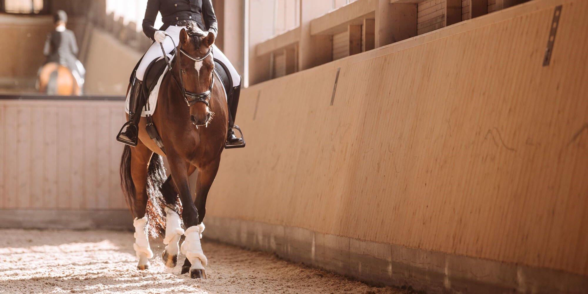 Die Ausbildungsskala des Pferdes für die korrekte Pferdeausbildung